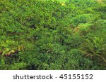 Tree Jungle Of Coconut