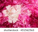 different color peonies  for... | Shutterstock . vector #451562563