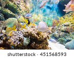 groupof tropical sea fish...   Shutterstock . vector #451568593