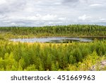 autumn landscape of pine forest ... | Shutterstock . vector #451669963