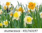 Close Up Photo Of Flowerbed Of...