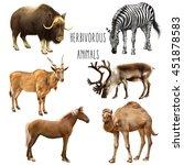 set of large beasts musk ox ...   Shutterstock . vector #451878583