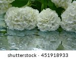 flowers with reflection in... | Shutterstock . vector #451918933