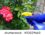Stock photo spray and roses 452029663