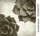 Small photo of textured old paper background with succulent Aeonium plant