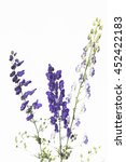 Small photo of aconite on a white background