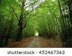 beech forest in the mountains... | Shutterstock . vector #452467363
