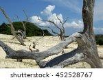 cumberland island national... | Shutterstock . vector #452528767