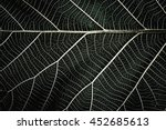 abstract leaf background. close ... | Shutterstock . vector #452685613