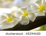 White spa flower in a brown bowl with blur background in Thailand - stock photo