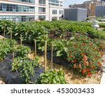 urban farm   growing vegetables ... | Shutterstock . vector #453003433
