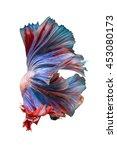 Double Tail Betta Fish  Siames...