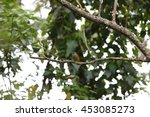 Small photo of African golden weaver in Uganda
