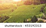 vineyards of the veneto valleys