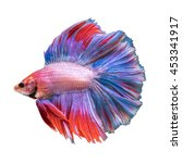 double tail betta fish  siamese ... | Shutterstock . vector #453341917