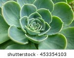 green cactus flower background  ... | Shutterstock . vector #453354103