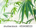 plants of meadows and fields  ... | Shutterstock . vector #453438523