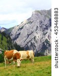 Small photo of view on an alp with grazing cows in the karwendel mountains of the european alps by daylight
