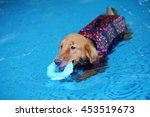 golden retriever dog wear life... | Shutterstock . vector #453519673