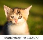 Horizontal Photo Of Little Cat...