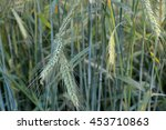 ears of wheat | Shutterstock . vector #453710863
