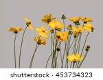 yellow and orange flowers ... | Shutterstock . vector #453734323