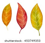 autumn watercolor leaves. fall... | Shutterstock . vector #453749353