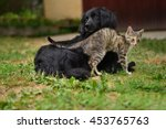 Cat And Dog Playing Together O...