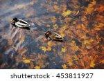Two Mallard Duck On A Water In...