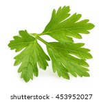 parsley herb isolated | Shutterstock . vector #453952027