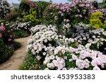 Stock photo rose 453953383