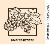 hand drawn decorative grapes ...   Shutterstock .eps vector #453972907