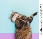 portrait of fluffy cat in... | Shutterstock . vector #454048717