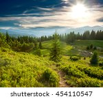 green pine forest and meadow in ... | Shutterstock . vector #454110547