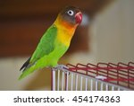 Small photo of Masked lovebird or Agapornis personatus sitting on the cage.
