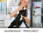 veterinary clinic worming your...   Shutterstock . vector #454213027