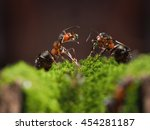Two Forest Ants With Water...