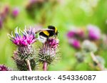 Bumblebee On A Thistle Flower ...