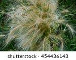 Fluffy Ornamental Grass With...