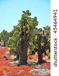 Cactus Tree On A Galapagos...