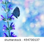 Butterfly On The Flower Over...
