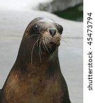 Funny Looking Sea Lion