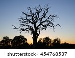 Wide Single Dead Oak Tree By...