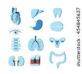 vector set of human body organs.... | Shutterstock .eps vector #454845637