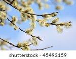 branch | Shutterstock . vector #45493159
