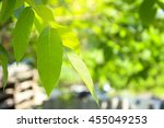 young green leaves of walnut in ... | Shutterstock . vector #455049253