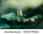 a small warbler of the upper... | Shutterstock . vector #455079403