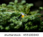 a small warbler of the upper... | Shutterstock . vector #455100343