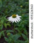 Wild Flowers Daisy