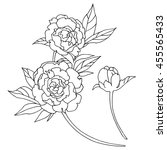 peony  line drawings for design ... | Shutterstock .eps vector #455565433
